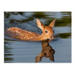 USA, Minnesota, Sandstone, Minnesota Wildlife 19 Postcard