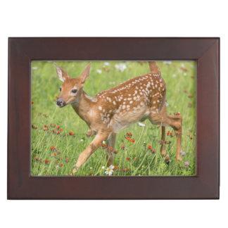 USA, Minnesota, Sandstone, Minnesota Wildlife 20 Keepsake Box