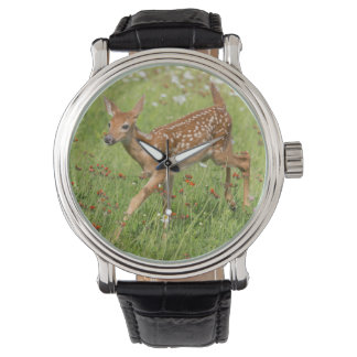 USA, Minnesota, Sandstone, Minnesota Wildlife 20 Watches
