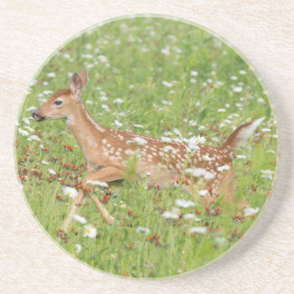USA, Minnesota, Sandstone, Minnesota Wildlife 21 Coaster