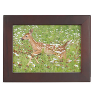 USA, Minnesota, Sandstone, Minnesota Wildlife 21 Keepsake Box