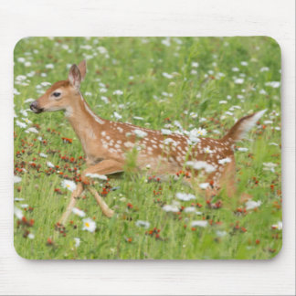 USA, Minnesota, Sandstone, Minnesota Wildlife 21 Mouse Pad