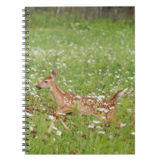 USA, Minnesota, Sandstone, Minnesota Wildlife 21 Note Books