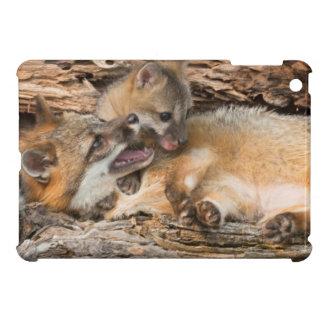 USA, Minnesota, Sandstone, Minnesota Wildlife 23 iPad Mini Cover