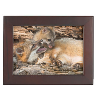 USA, Minnesota, Sandstone, Minnesota Wildlife 23 Keepsake Box