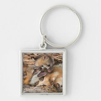 USA, Minnesota, Sandstone, Minnesota Wildlife 23 Key Ring