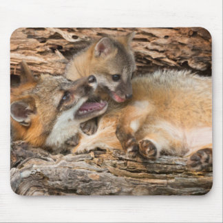 USA, Minnesota, Sandstone, Minnesota Wildlife 23 Mouse Mat