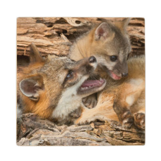 USA, Minnesota, Sandstone, Minnesota Wildlife 23 Wood Coaster