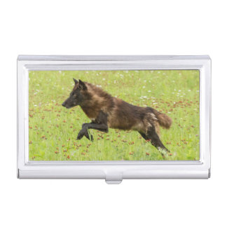 USA, Minnesota, Sandstone, Minnesota Wildlife 24 Business Card Holder