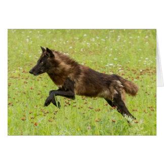 USA, Minnesota, Sandstone, Minnesota Wildlife 24 Card