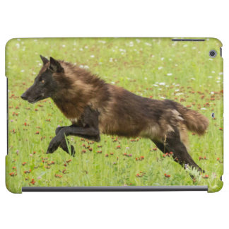 USA, Minnesota, Sandstone, Minnesota Wildlife 24 Cover For iPad Air