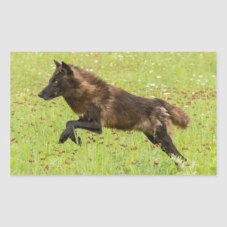 USA, Minnesota, Sandstone, Minnesota Wildlife 24 Rectangular Sticker