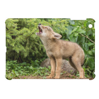 USA, Minnesota, Sandstone, Minnesota Wildlife 2 iPad Mini Case