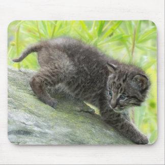USA, Minnesota, Sandstone, Minnesota Wildlife 2 Mouse Mat