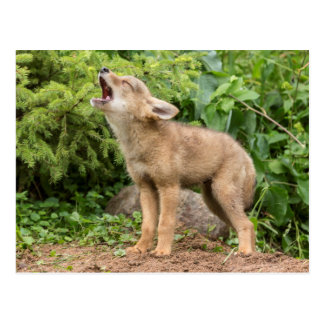 USA, Minnesota, Sandstone, Minnesota Wildlife 2 Post Cards