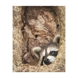 USA, Minnesota, Sandstone, Minnesota Wildlife 3 Canvas Print