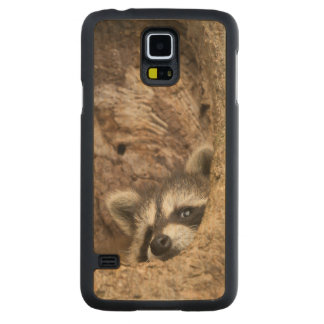 USA, Minnesota, Sandstone, Minnesota Wildlife 3 Carved Maple Galaxy S5 Case