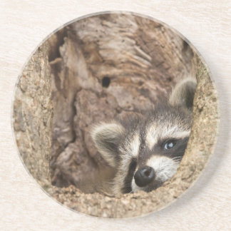 USA, Minnesota, Sandstone, Minnesota Wildlife 3 Coaster