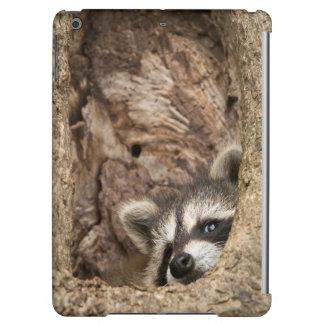 USA, Minnesota, Sandstone, Minnesota Wildlife 3 Cover For iPad Air