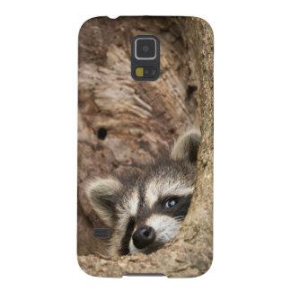 USA, Minnesota, Sandstone, Minnesota Wildlife 3 Galaxy S5 Cover