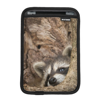 USA, Minnesota, Sandstone, Minnesota Wildlife 3 iPad Mini Sleeve
