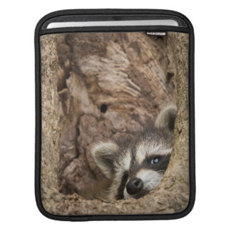 USA, Minnesota, Sandstone, Minnesota Wildlife 3 iPad Sleeve