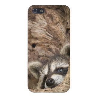 USA, Minnesota, Sandstone, Minnesota Wildlife 3 iPhone 5 Case