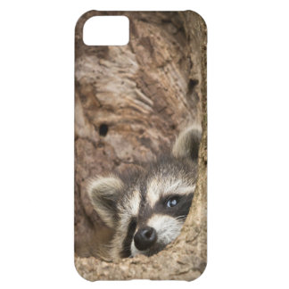 USA, Minnesota, Sandstone, Minnesota Wildlife 3 iPhone 5C Case