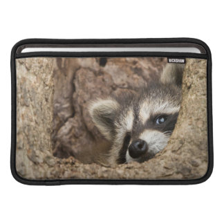 USA, Minnesota, Sandstone, Minnesota Wildlife 3 MacBook Sleeve
