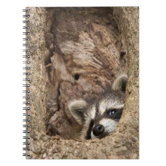 USA, Minnesota, Sandstone, Minnesota Wildlife 3 Notebook