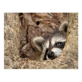 USA, Minnesota, Sandstone, Minnesota Wildlife 3 Postcard