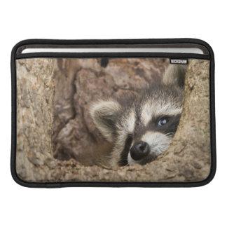 USA, Minnesota, Sandstone, Minnesota Wildlife 3 Sleeve For MacBook Air