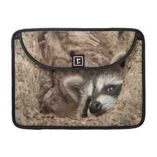 USA, Minnesota, Sandstone, Minnesota Wildlife 3 Sleeve For MacBook Pro