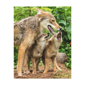 USA, Minnesota, Sandstone, Minnesota Wildlife 4 Canvas Print