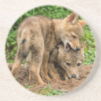 USA, Minnesota, Sandstone, Minnesota Wildlife 4 Coaster