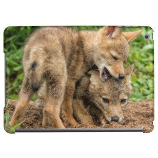 USA, Minnesota, Sandstone, Minnesota Wildlife 4 Cover For iPad Air