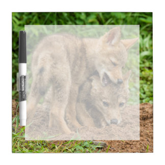 USA, Minnesota, Sandstone, Minnesota Wildlife 4 Dry Erase Board