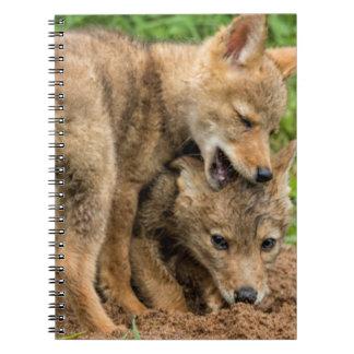USA, Minnesota, Sandstone, Minnesota Wildlife 4 Notebooks