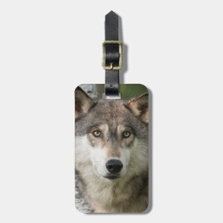 USA, Minnesota, Sandstone, Minnesota Wildlife 5 Bag Tag