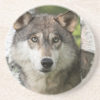 USA, Minnesota, Sandstone, Minnesota Wildlife 5 Coaster