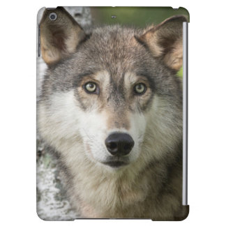 USA, Minnesota, Sandstone, Minnesota Wildlife 5 iPad Air Case