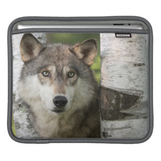USA, Minnesota, Sandstone, Minnesota Wildlife 5 iPad Sleeve