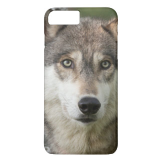 USA, Minnesota, Sandstone, Minnesota Wildlife 5 iPhone 8 Plus/7 Plus Case