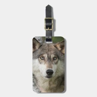 USA, Minnesota, Sandstone, Minnesota Wildlife 5 Luggage Tag