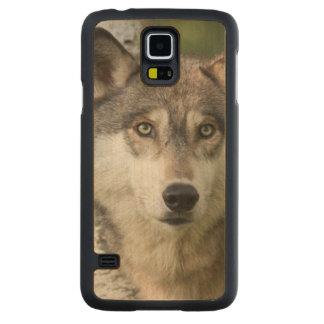 USA, Minnesota, Sandstone, Minnesota Wildlife 5 Maple Galaxy S5 Case