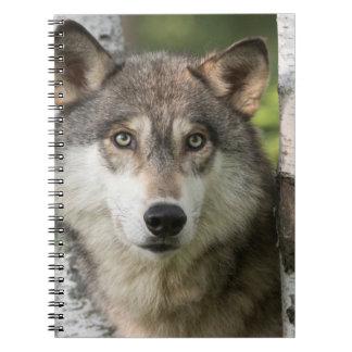 USA, Minnesota, Sandstone, Minnesota Wildlife 5 Notebook
