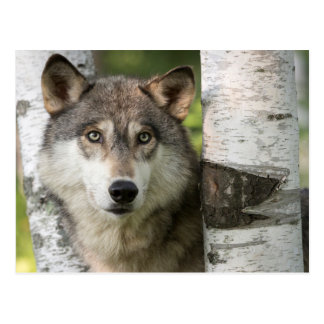 USA, Minnesota, Sandstone, Minnesota Wildlife 5 Post Cards