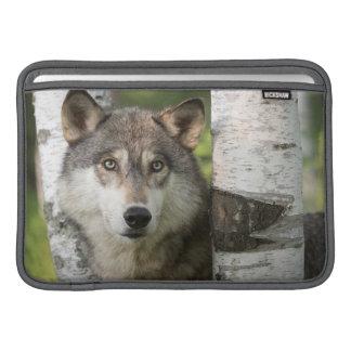 USA, Minnesota, Sandstone, Minnesota Wildlife 5 Sleeve For MacBook Air