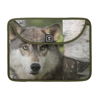 USA, Minnesota, Sandstone, Minnesota Wildlife 5 Sleeve For MacBook Pro