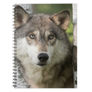 USA, Minnesota, Sandstone, Minnesota Wildlife 5 Spiral Note Book